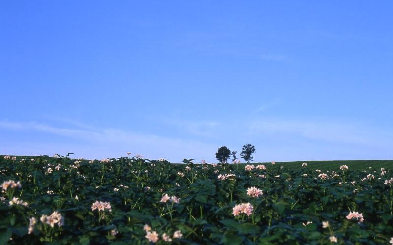 Hokkaidoh_09