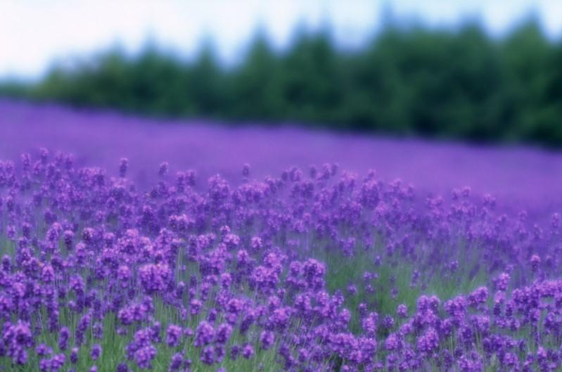 Hokkaidoh_12